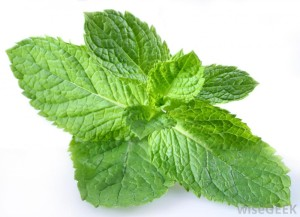 Peppermint – The Oil of a Buoyant Heart