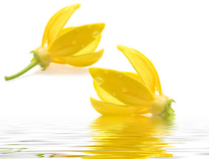 Ylang Ylang – The Oil of the Inner Child